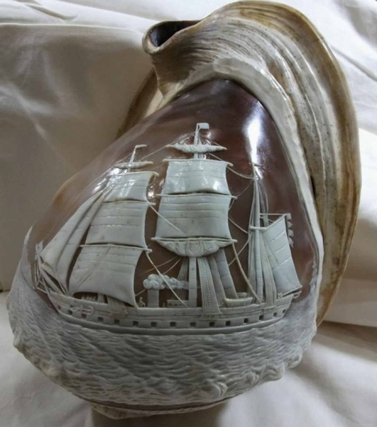 Carved Shell - Steam Ship